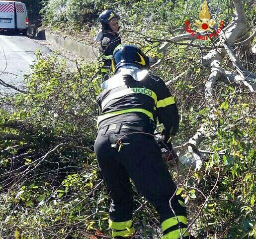 Albero cade sulla corsia sud della Pontina, disagi al traffico